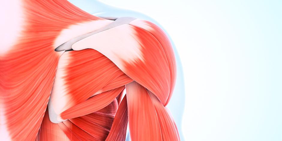 Dermoaroma-Tissue-regeneration